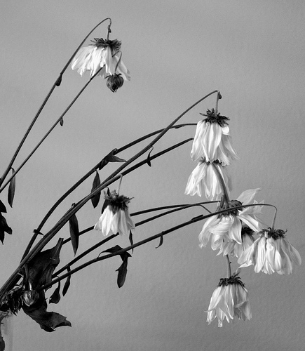 Dead_flowers_got_permission_4
